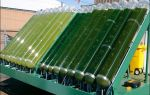 Биотопливо из водорослей: технология производства, перспективы развития