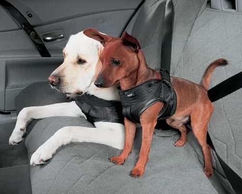 Правила безопасной перевозки кошек и собак в автомобиле
