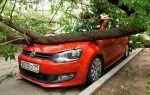 Как поступить автовладельцу, если упавшее дерево повредило машину?