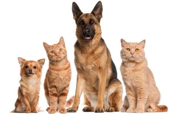 Перевозка кошек и собак