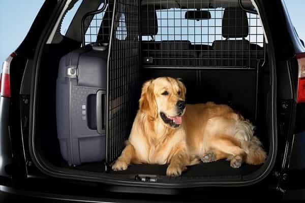 Перевозка собаки в багажнике