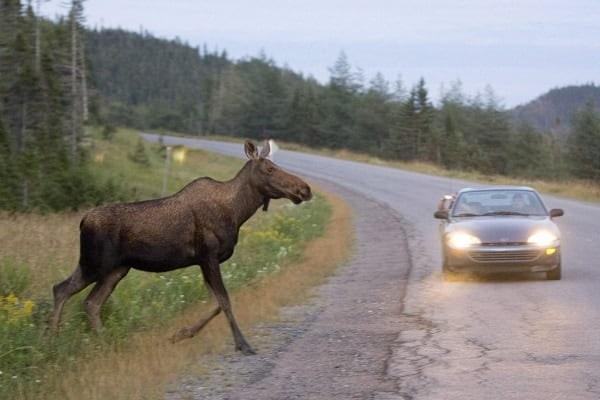 Дикие животные на дороге